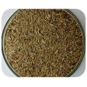 Sementes Azevém Anual - Caixa com 1,0 kg