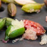 Muda de Caviar Vegetal ou Laranjinha Caviar