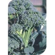Sementes de Couve Brócolis Piracicaba Precoce Peletizada - Lata com 3000 sementes